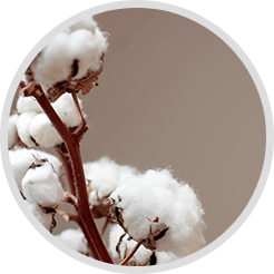Raw Cotton - Coppersmith