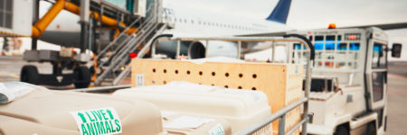 Coppersmith Global Logistics works on behalf of American Airlines in clearing arriving pets from international origins.