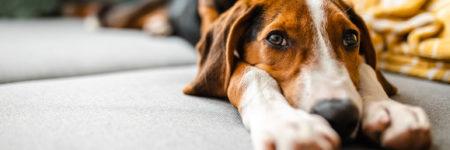 CDC Canine Update